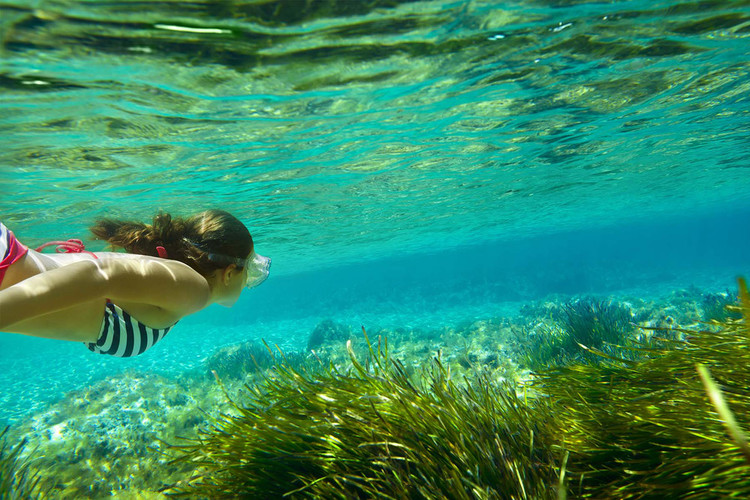 Posidonia: the queen of crystal clear seas in the Balearic Islands