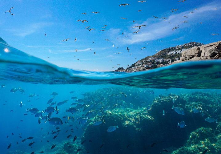 BYS 2020 Video Recap: Environmental Matters