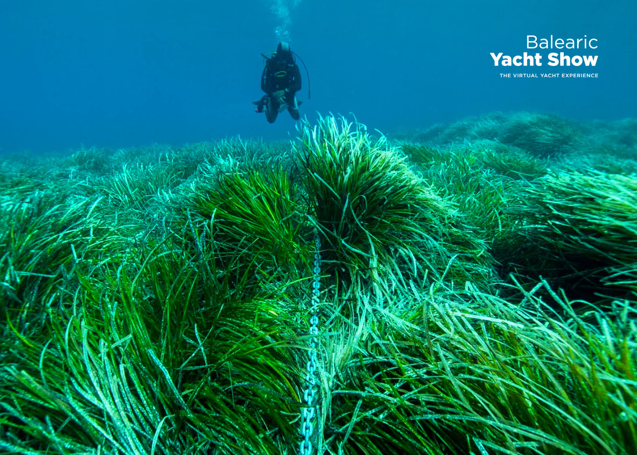 Posidonia: cómo preservar el fondo marino (Masterclass)